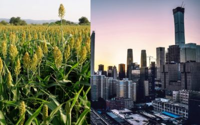 What Will the Future Hold? City Sprawl & Systems Dynamics